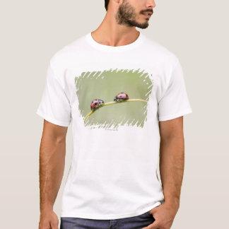 茎、Bieiの北海道、日本のてんとう虫 Tシャツ
