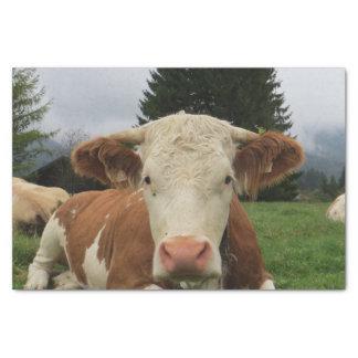 茶色および白い牛置くことの閉めて下さい 薄葉紙