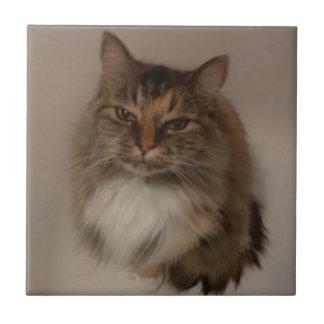 茶色のぶち猫のセラミックタイル タイル