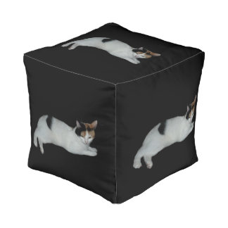 茶色のぶち猫 プーフ