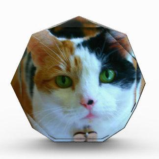 茶色のぶち猫 表彰盾
