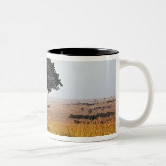 草が茂った平野、マサイ語マラの独身のなアカシアの木、 ツートーンマグカップ