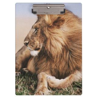 草で休んでいるライオン クリップボード