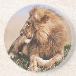 草で休んでいるライオン コースター