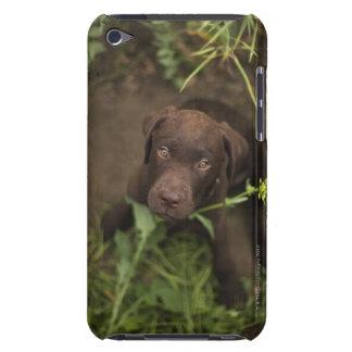 草に坐っているラブラドールの子犬 Case-Mate iPod TOUCH ケース