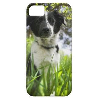 草に坐っている犬 iPhone SE/5/5s ケース