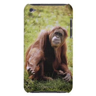 草に坐り、カメラを見ているオランウータン Case-Mate iPod TOUCH ケース