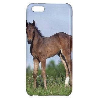 草に立っている純血種の子馬 iPhone5Cケース