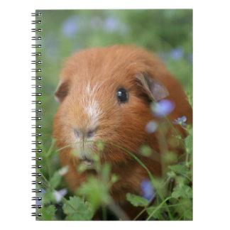 草のかわいく愛らしいショウガのモルモット外で ノートブック