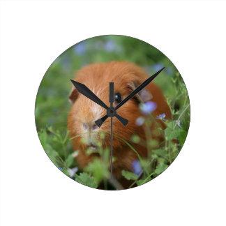 草のかわいく愛らしいショウガのモルモット外で ラウンド壁時計