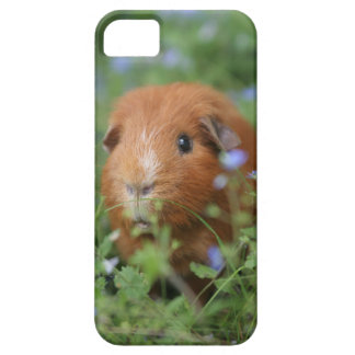 草のかわいく愛らしいショウガのモルモット外で iPhone SE/5/5s ケース
