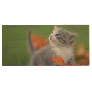 草のアウトドアを遊んでいるかわいい赤ん坊の子ネコ ウッドUSBフラッシュドライブ