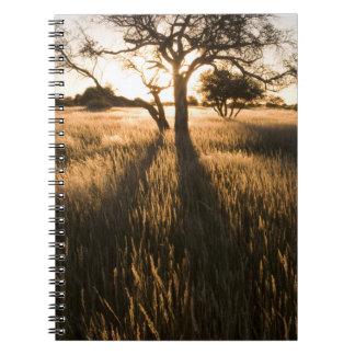 草のアカシアの木のシルエット。 Mariental ノートブック