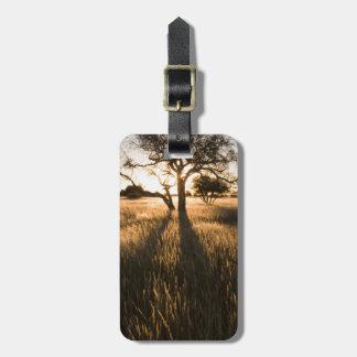 草のアカシアの木のシルエット。 Mariental ラゲッジタグ