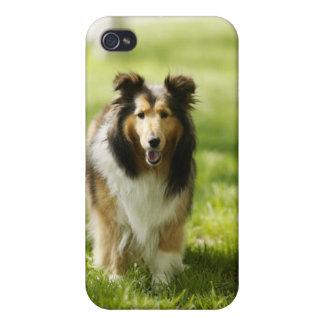 草のシェットランド・シープドッグのランニング iPhone 4 ケース