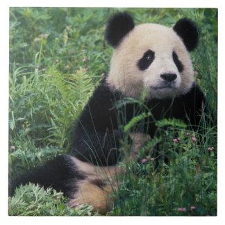 草のジャイアントパンダ、Wolongの谷、四川 タイル
