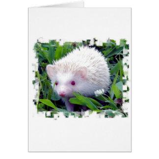 草のハリネズミ カード