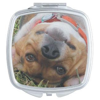 草のビーグル犬の圧延