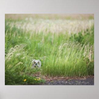 草のフクロウ ポスター