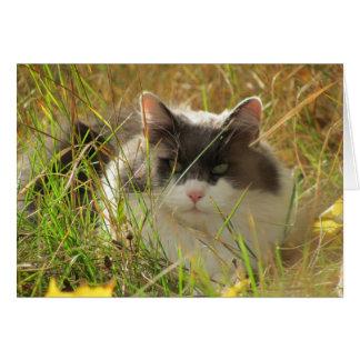 草のメインのあらいぐま猫Chillin カード