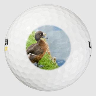 草のメスの赤茶色の房状の潜水ガモ ゴルフボール