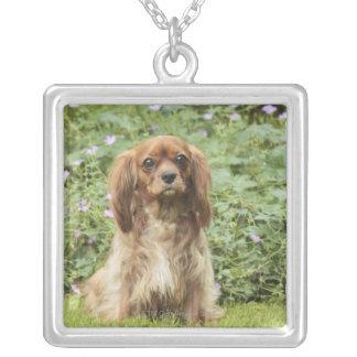 草のルビー色の無頓着なチャールズ王スパニエル犬 シルバープレートネックレス