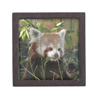 草のレッサーパンダ ギフトボックス