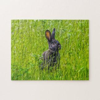 草の写真のパズルの黒いウサギ ジグソーパズル