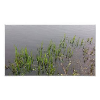 草の反射 フォトプリント