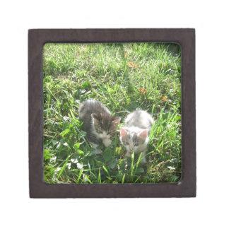 草の子ネコ ギフトボックス