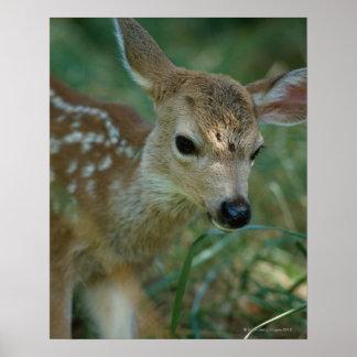 草の子鹿 ポスター