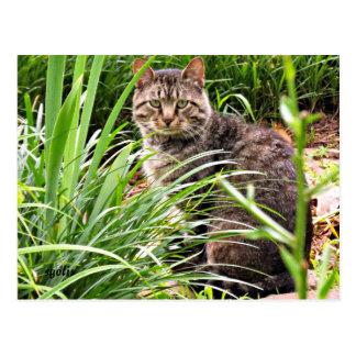 草の庭の写真の郵便はがきの美しい虎猫猫 ポストカード