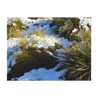 草の揺りかご山タスマニアオーストラリアの雪 キャンバスプリント