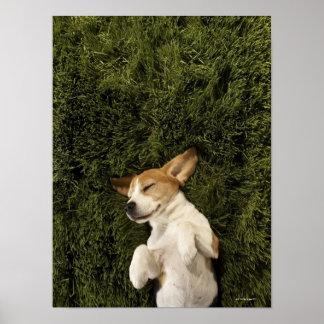 草の睡眠にあっている犬 ポスター
