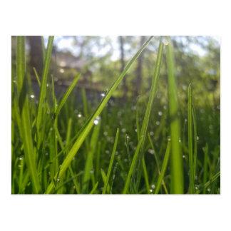 草の美しい雨滴 ポストカード