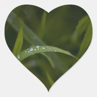草の葉の雨滴 ハートシール