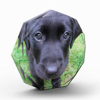 草の黒いラブラドール犬 表彰盾