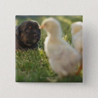 草のPekineseの子犬 缶バッジ