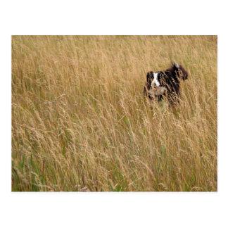 草を通る犬のランニング ポストカード