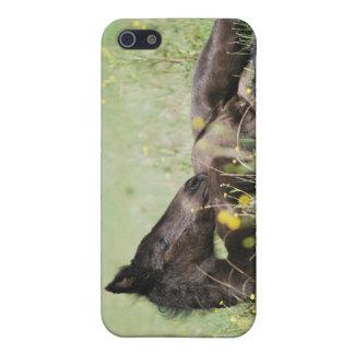 草原にあっているベビーの子馬 iPhone 5 カバー
