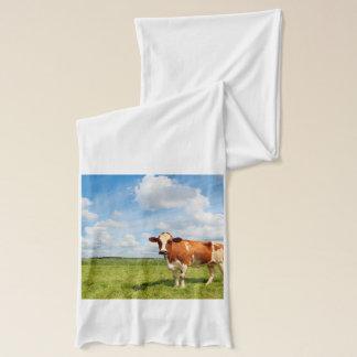 草原に立っている好奇心が強い牛 スカーフ