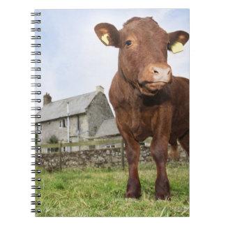 草原に立っている子牛 ノートブック