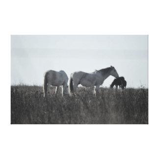 草原のキャンバスの馬 キャンバスプリント