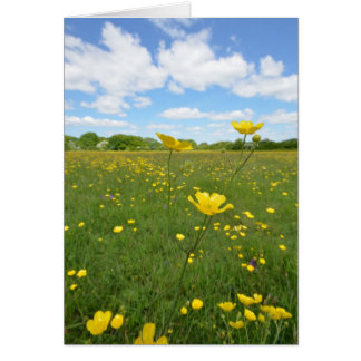 草原のキンボウゲ カード