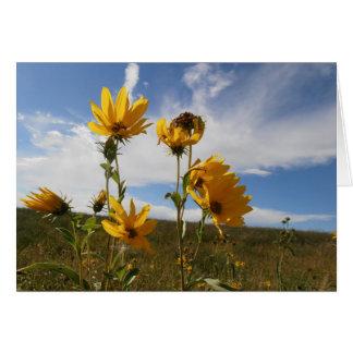 草原の日没の挨拶状 カード