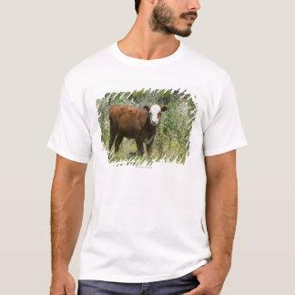 草原の牧草地のHerefordの子牛(ウシのトーラス) Tシャツ