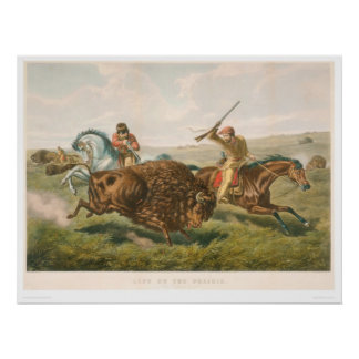 草原の生命: バッファローの狩り(0878A) ポスター