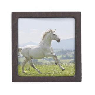 草原の白馬のランニング ギフトボックス
