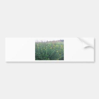 草原の秋の花 バンパーステッカー