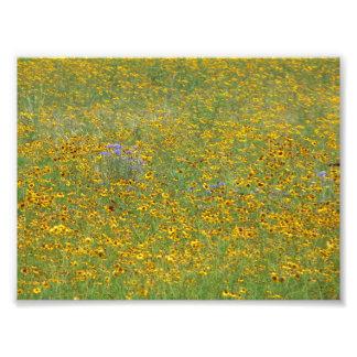 草原の花 フォトプリント